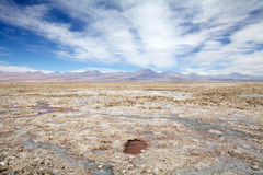 Chaxa lagun i Salar de Atacama, Chile Royaltyfri Foto