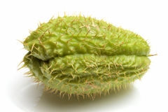Chayote green vegetable Stock Images
