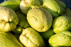 Chayote harvest of vegetables. Stock Photo