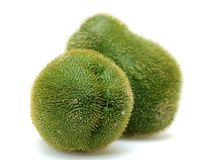 Chayote Squash Stock Photo