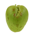 Chayote Vegetable Side View Center Royalty Free Stock Photos