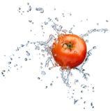chełbotania pomidoru woda Fotografia Stock