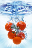 chełbotania pomidoru woda Zdjęcia Stock
