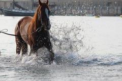 Chełbotanie koń Obrazy Royalty Free