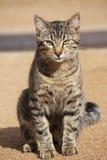 Che cosa è sul gatto del pussy? Fotografie Stock