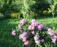 Che cosa decorerà il vostro giardino fotografia stock