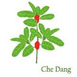 Che Dang Ejemplo de una planta en un vector con la flor para nosotros ilustración del vector