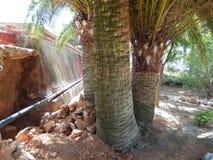 Che ` s più forte - una pietra o un albero Fotografia Stock Libera da Diritti