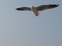 Che ` s su? , chiedere dell'uccello Fotografia Stock