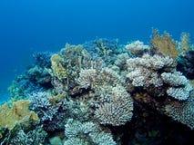 che stupisce i coralli nel Mar Rosso Fotografie Stock Libere da Diritti