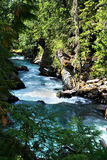 Cheakamus rzeka Obrazy Stock