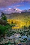 Cheam bagien regionalności Jeziorny park, Rosedale, kolumbia brytyjska, Kanada obraz stock