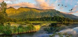 Cheam Lake Wetlands Regional Park, Rosedale, British Columbia, C. Panorama format photo of Cheam Lake Wetlands Regional Park with the Mount Cheam in the stock photography