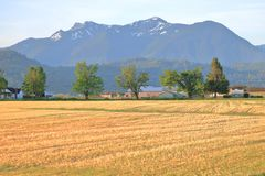 Cheam Mountain Range and Farm. The Cheam Mountain Range near Chilliwack, British Columbia, Canada that overlooks the golden harvested grasslands on a rural farm stock image