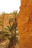 The Chebika oasis in Tunisia Royalty Free Stock Photography