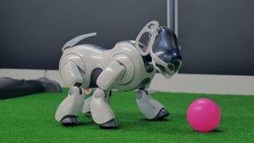 Cheboksary Ryssland - September 26, 2017: Stad av robotar Robot-hund på utställningen Växelverkande intelligent husdjur arkivfilmer