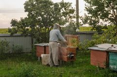 Check the bee beehive for the presence of honey. Check the bee beehive for presence of honey stock photo