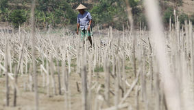 Check the condition of farmers in the village tanamanya Klewor B Royalty Free Stock Photos