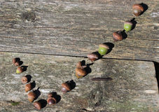 Check Mark Made of Acorns. A check mark symbol made of acorns laying on an old board stock photos