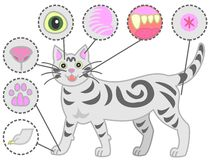 Check-points of cats body. For his health royalty free illustration