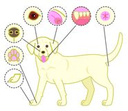 Check-points of dogs body. For his health stock illustration