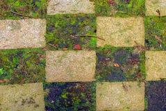 Checkerboard χλόης Στοκ Εικόνα