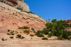 Checkerboard Mesa in Zion National Park, Utah Royalty Free Stock Photos