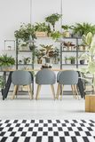 Checkered rug in dining room. Checkered, black and white rug in bright dining room interior with wooden table, gray chairs and plants Stock Photos