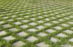 Checkered grass Royalty Free Stock Photography