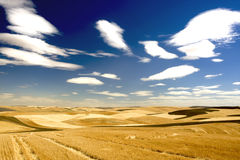 Checkered Landscape. Of wheat, barley, lentil, gabanzo farm land Royalty Free Stock Photo