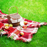 Checkered Plaid Picnic Basket Green Grass Summer. Checkered Plaid Picnic Apples Basket Fruit Green Grass Summer Time Rest Background Design Web Concept Long Stock Photography