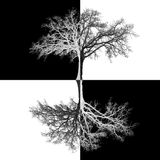 Checkered tree Stock Images