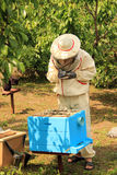 Checking Beehives. A man inspects and records outside the hive Stock Image