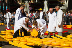 Checking the cheese quality at alkmaar market Stock Image