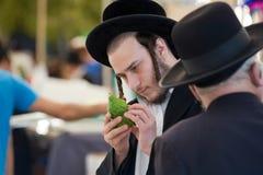 Checking a citron Stock Photos