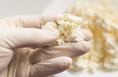 Checking the cottage cheese. . Checking the cottage cheese. A hand in a rubber glove holds cottage cheese. Study of the content of harmful substances Royalty Free Stock Photos