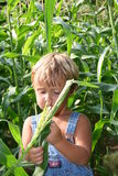 Checking the crops Stock Photos