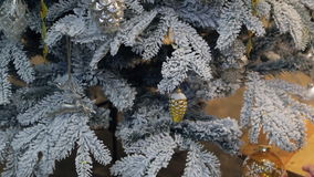 Checking decoration on artificial fir tree covered with frost. We see mint branches with white needles with many toys on ribbons: gold pine cone with snow stock video footage
