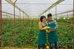 Checking documentation on flowers. Asian hothouse workers discussing information in document Stock Photography