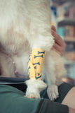 Checking dog leg sore. With a yellow bandage. , process in vintage style Royalty Free Stock Photography