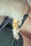 Checking dog leg sore. With a yellow bandage. , process in vintage style Royalty Free Stock Images