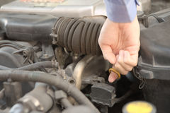 Checking engine lubricant Stock Photos