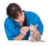 Checking eyes of cat in veterinary clinic. isolated Stock Photography