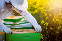 Checking the hives Stock Photography