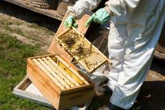Checking a honeycomb Stock Photos