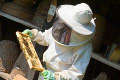 Checking a honeycomb Royalty Free Stock Photo