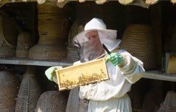 Checking a honeycomb Royalty Free Stock Photos