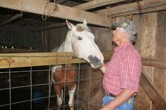 Checking Out the Horse Stock Images