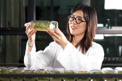 Checking plant bottle Stock Image