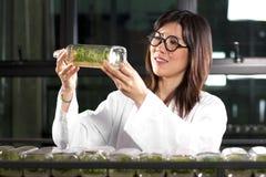 Checking plant bottle Stock Image